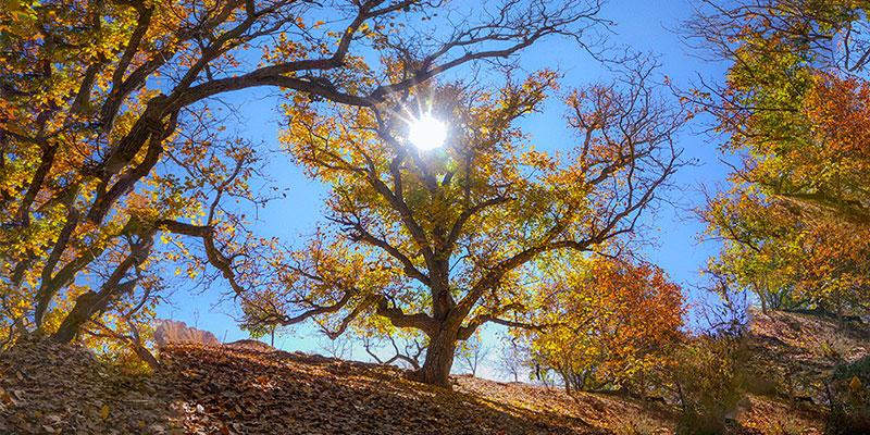 پاییز…