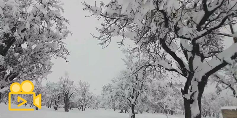 زمستان است…