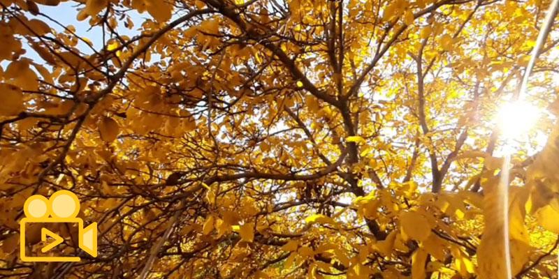 پاییز وهم انگیز